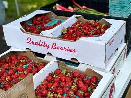 caissettes fraises