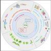 protéines légumineuses